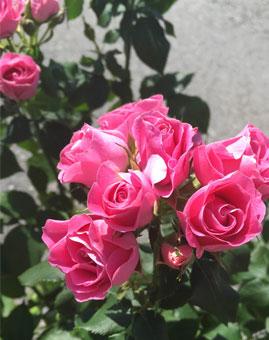 På bloggen: Planteringstips