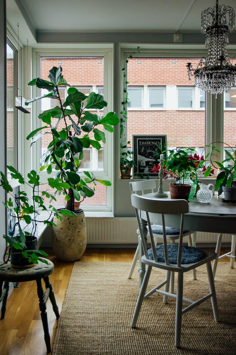 hemma hos trea gröna växter kök midbec tapeter